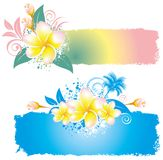 Background with flower plumeria Royalty Free Stock Photos
