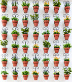 Background from flower pots Stock Photo