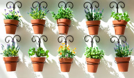 Background from flower pots Royalty Free Stock Photos