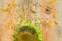 Background flower sunflower seeds wooden countertop Royalty Free Stock Images