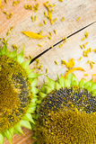 Background flower sunflower seeds wooden countertop Royalty Free Stock Photo