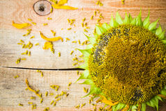 Background flower sunflower seeds wooden countertop Royalty Free Stock Image