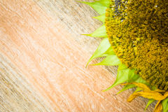 Background flower sunflower seeds wooden countertop Royalty Free Stock Photography