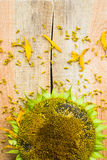 Background flower sunflower seeds wooden countertop Stock Photo