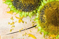 Background flower sunflower seeds wooden countertop Royalty Free Stock Photos
