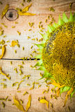 Background flower sunflower seeds wooden countertop Stock Photography