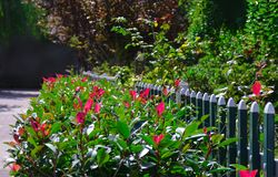 Background - the flowerbed and the fence Stock Images