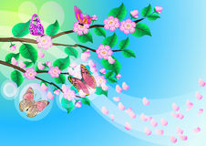 Background with flowering branch of the cherries Stock Photo