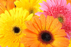 Background of flowers Stock Photography