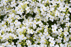 Background from flowers Stock Photos