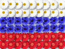 Background of flowers as Russia flag. Abstract background of flowers as Russia flag. Close-up. Studio photography Royalty Free Stock Photo