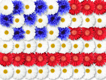 Background of flowers as USA flag Stock Images
