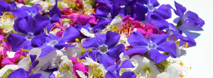 Background flowers Royalty Free Stock Photography