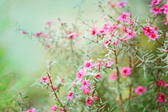Background with flowers - blurred blossoms Stock Photos