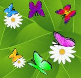 Background  with flowers and butterflies Royalty Free Stock Photography