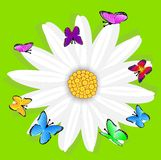 Background  with flowers and butterflies Stock Photography