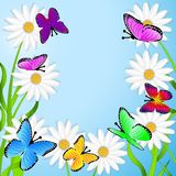 Background  with flowers and butterflies Royalty Free Stock Photo