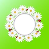 Background with the flowers of camomile and ladybirds Royalty Free Stock Photos