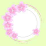 Background with flowers. Circle background with pink flowers Stock Photo