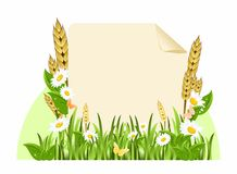Background with flowers and ears of corn Royalty Free Stock Photo