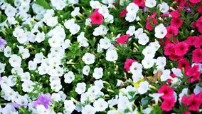 Background of flowers - flowers in the garden - -beautiful flower stock images