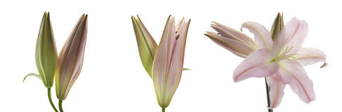 background flowers gradient Στοκ φωτογραφία με δικαίωμα ελεύθερης χρήσης