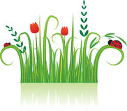 Background with flowers and Ladybird. Stock Photography