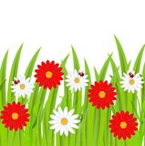 Background  with flowers and ladybirds Royalty Free Stock Photography
