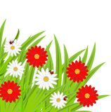 Background  with flowers and ladybirds Royalty Free Stock Image