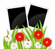 Background  with flowers and ladybirds Stock Photos