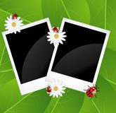 Background  with flowers and ladybirds Royalty Free Stock Images
