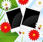 Background  with flowers and ladybirds Royalty Free Stock Photos