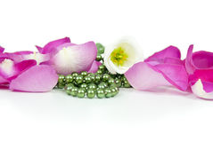Background flowers and pink rose petals Stock Photo