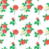 Background, Flowers Rose Stock Photo