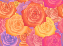 Background of the flowers of roses. Royalty Free Stock Photos