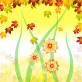Background Flowers Shows Backgrounds Abstract And Design Stock Images