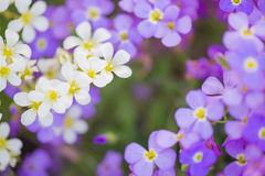 Background from flowers Stock Images