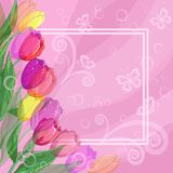 Background, flowers tulips and frame Stock Photography