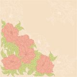 Background with flowers of wild roses Stock Image
