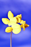 Background flowers yellow Stock Images