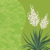 Background with flowers Yucca. Floral background with Yucca flowers and leaves and abstract pattern. Vector royalty free illustration