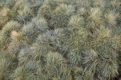 Background fluffy grass. Borderless gardens royalty free stock image