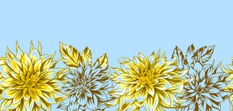 Background with fluffy yellow dahlias. stock images