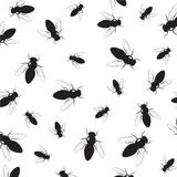 Background of a fly. Stock Photos