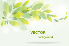 Background from  flying green leaves Royalty Free Stock Images