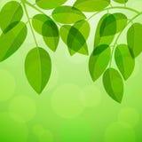 Background with foliage Stock Photo