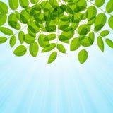Background with foliage Royalty Free Stock Photo