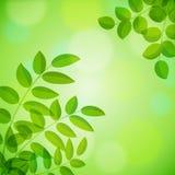 Background with foliage Stock Image