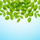 Background with foliage Royalty Free Stock Image