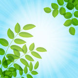 Background with foliage Royalty Free Stock Images